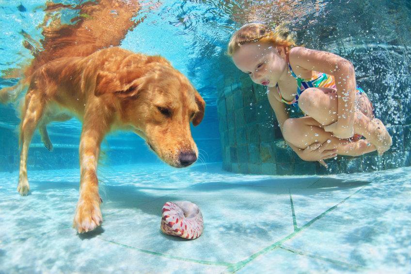 piscine coque ou piscine beton